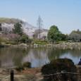 ここが大池です。