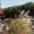 秋の風情を感じるすすきと大池